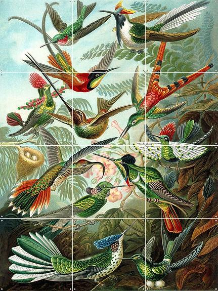 Hummingbirds _ 471x471 _ website.jpg