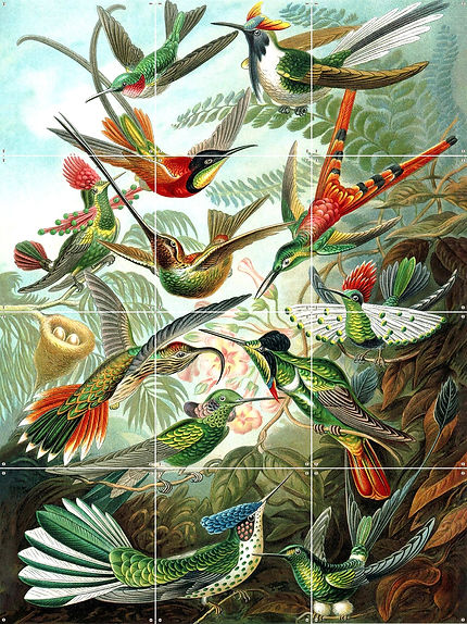Hummingbirds _ 471x471 _ website_edited.