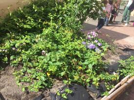 Jardin d'ornement cultivé par les élèves