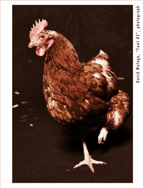 card_chicken2_outside.jpg