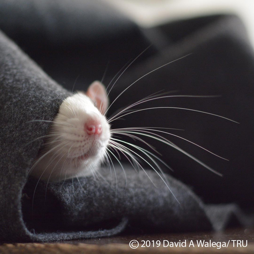 walega_ratties_johna_instagram.jpg