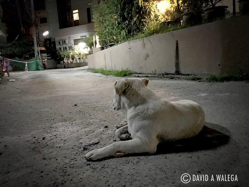 walega_dogsleepingstreet1_chiangmai_web_