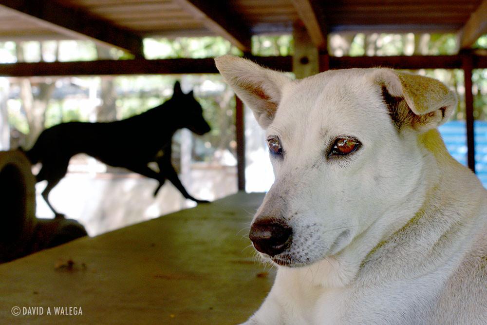 ENP_whitedog_1_web.jpg