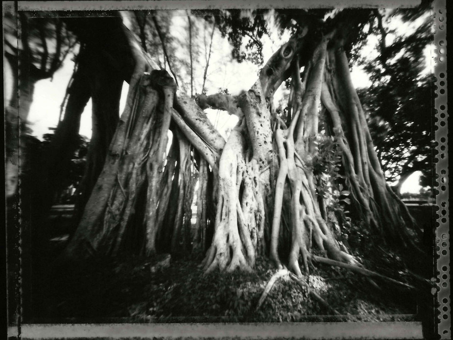 walega_pinhole_florida_trees (1).jpeg