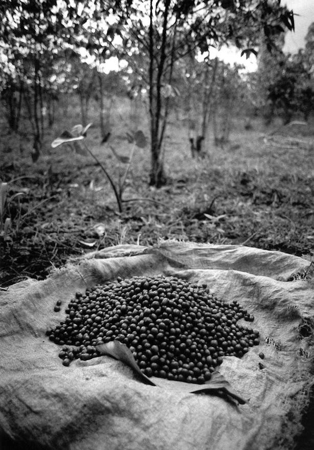 burundi_coffeebeans.jpg