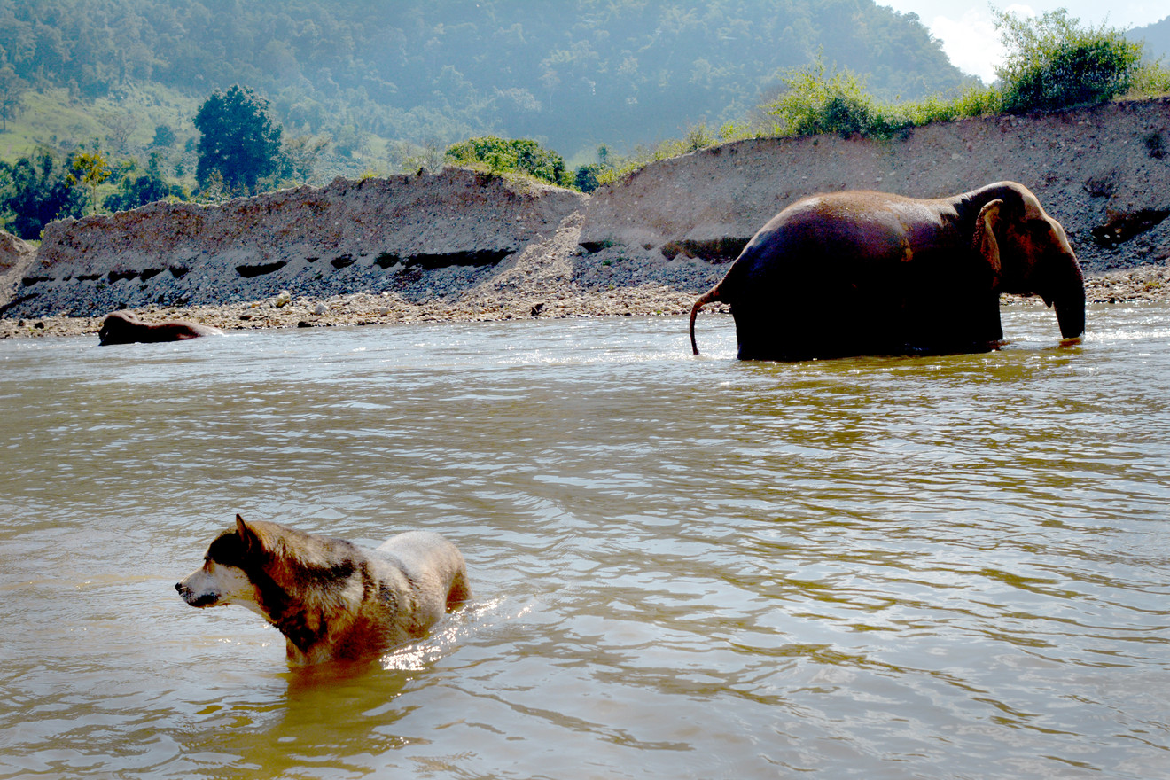 chiangmia_elephantbathing8_2018_11.jpg