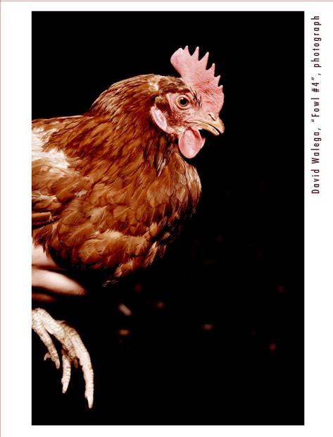 card_chicken3_outside.jpg