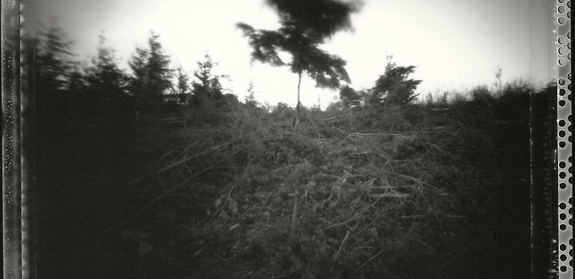 walega_pinhole__northbend_treeinwind.jpg