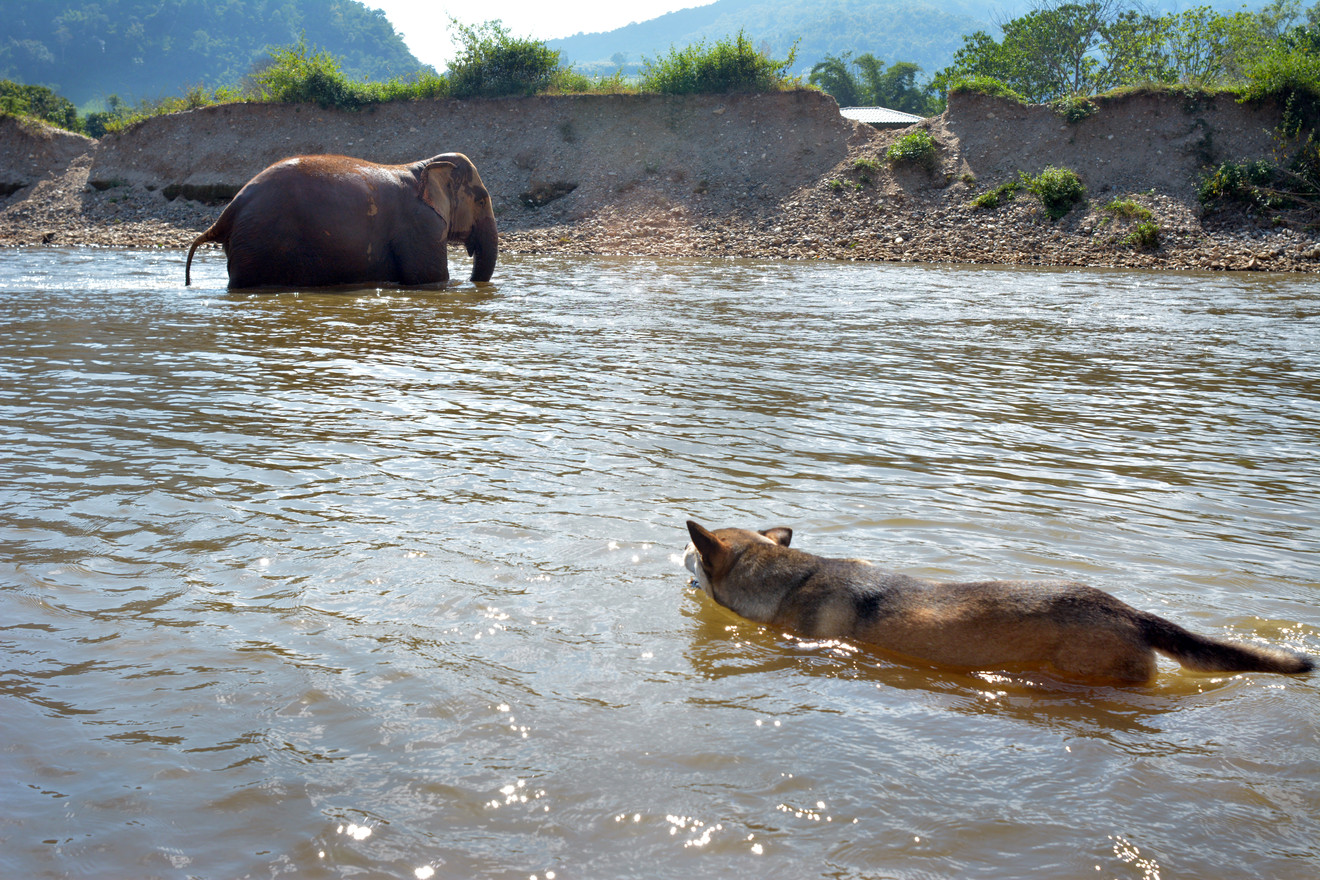 chiangmia_elephantbathing5_2018_11.jpg