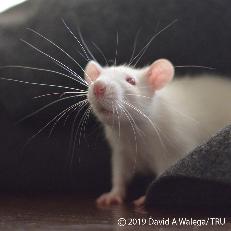 walega_ratties_casper2_instagram.jpg
