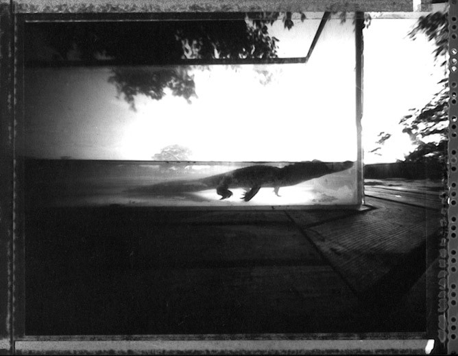 20091218_pinhole_alligator_1.jpg