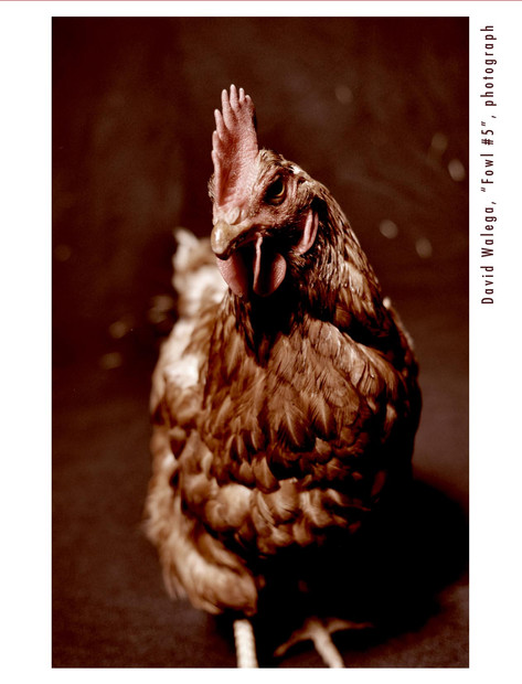 card_chicken4_outside.jpg