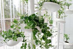 design et  plantes