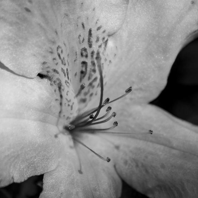 #blackandwhite  #flower #flowerupclose #naturephotography #naturelover #blackandwhitephotography #bl