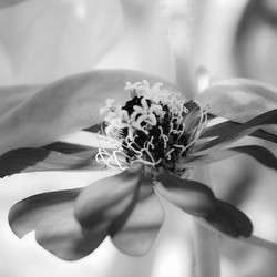 Feelin the flowers today _) #blackandwhite #natureisbeautiful #flower #naturephotography  #flowerpho