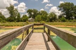 The dock at the pond