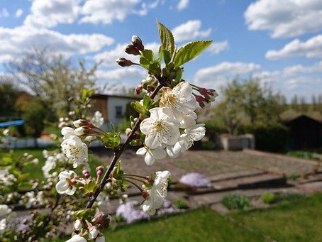 Advantages of green space allotments