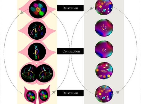 Contraction and relaxation at the micro and cosmic level