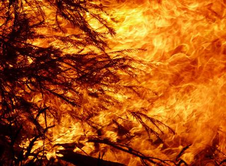 Australian fires spark state of emergency