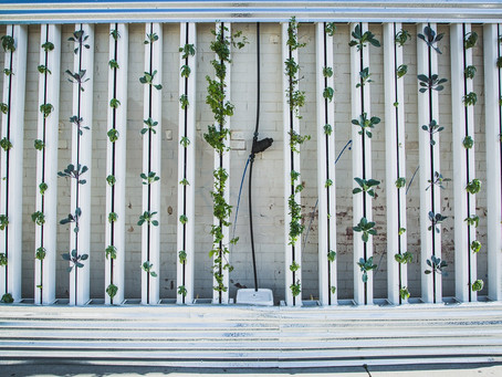 Vertical farming: has sustainable farming reached new heights?