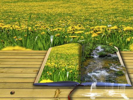 Open call for poetry announced for NatureVolve digital magazine