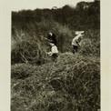 Grâce au prêt d'une amie de la famille, Pierre et Jacqueline acquièrent en novembre 1950 un terrain à St-Rémy-lès-Chevreuse – alors la pleine campagne, tout au bout de la Ligne de Sceaux (actuel RER B). Il leur faut d'abord défricher le terrain…