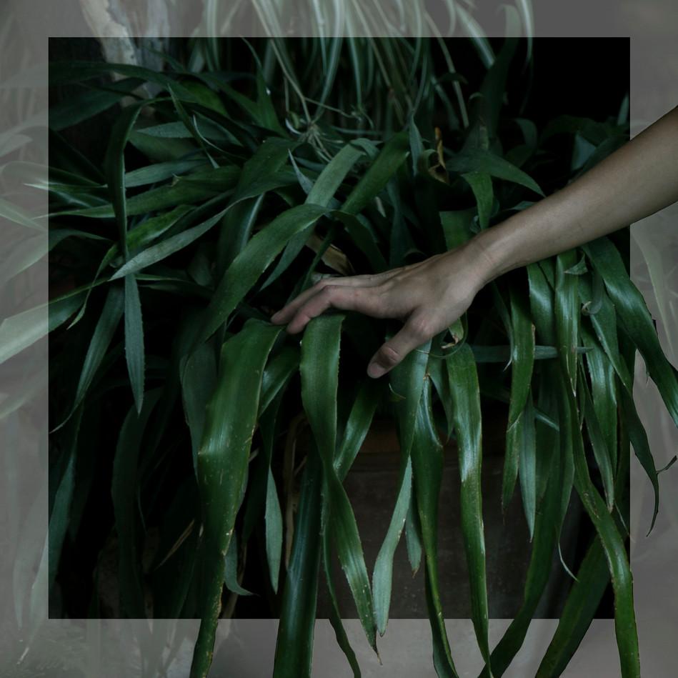 plantas y mano.jpg