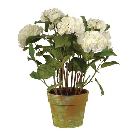 Home   PEONY HOME INTERIORS   Large White Hydrangea Plant In ...