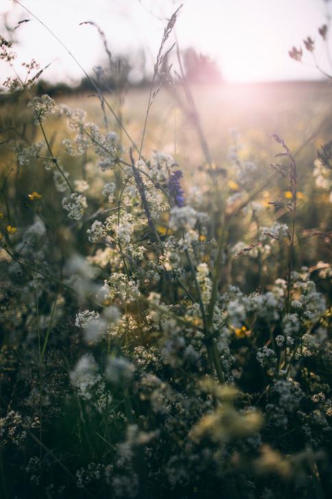 blommmor.jpg