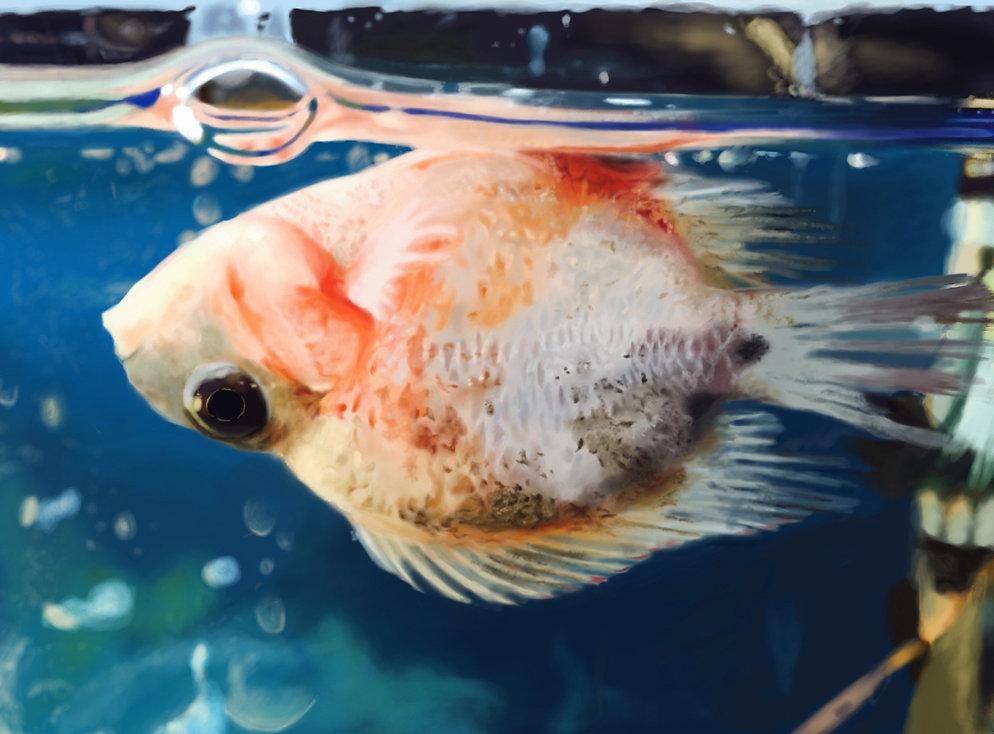 Floating Fish.jpg