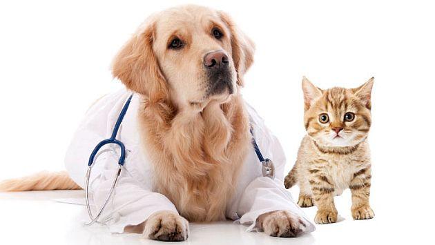 golden-veterinario.jpg