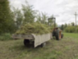 Hemp Harvest - US Hemp Building Associat