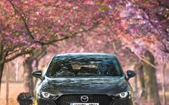 MazdaBlossomD-1.jpeg