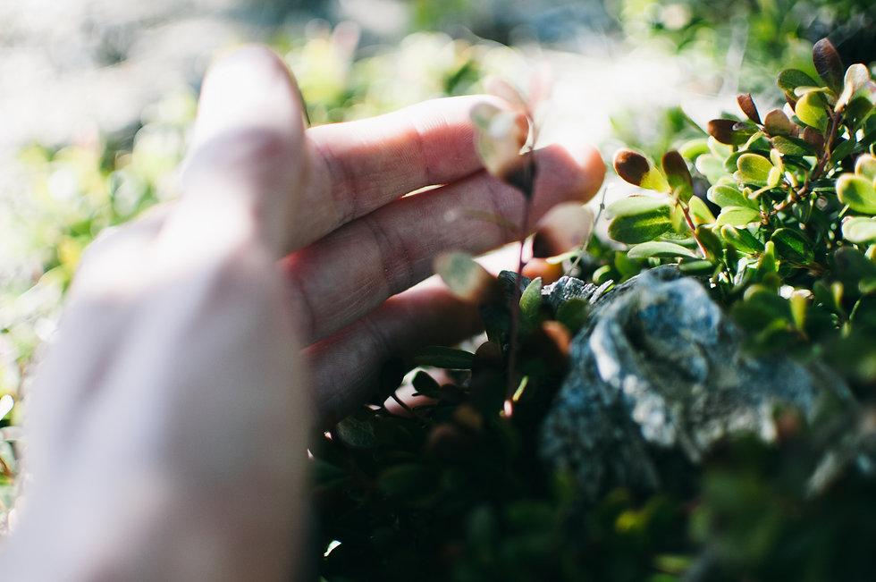 hand on plant.jpg