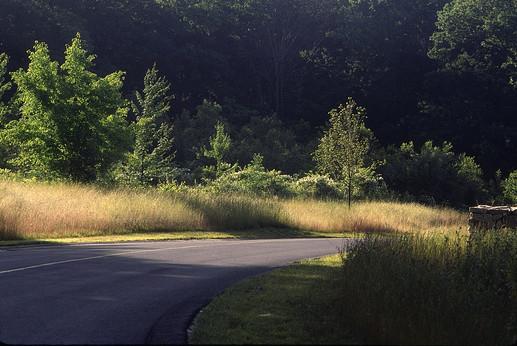 Road through meadow.jpg