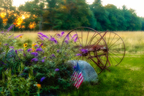 Blue Grass Roots Sunset
