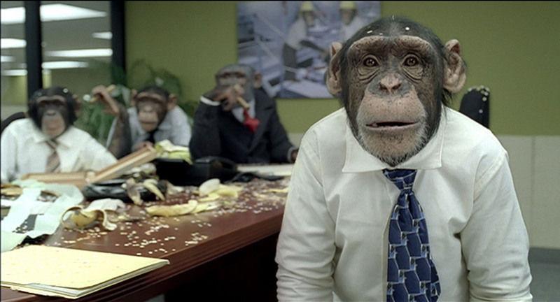 chimpanzee.jpeg