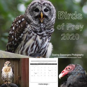 BirdsofPrey1.JPG