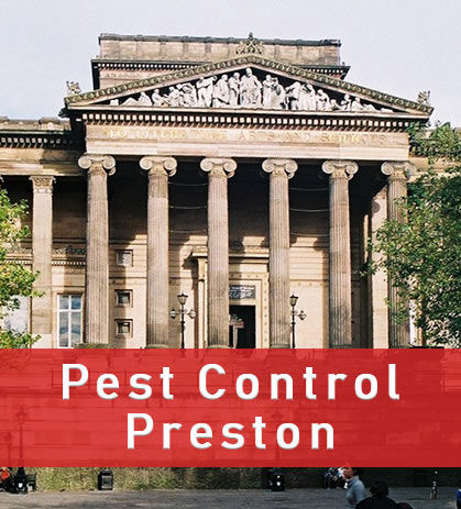 Pest Contol Preston