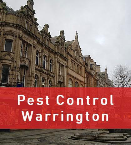 Pest Control Warrington