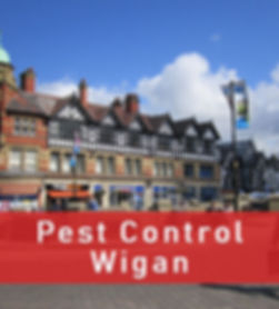 Pest Control in Wigan