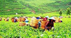 peran-pertanian-dalam-perekonomian-negar