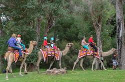 BSFFD-Camel-Ride