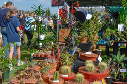 BSFFD-Cacti-Stall
