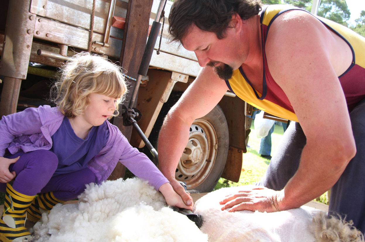 BSFFD-Little-Girl-Shearing