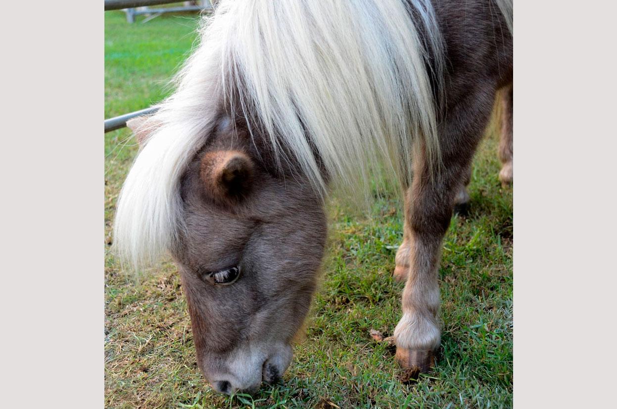BSFFD-Pony