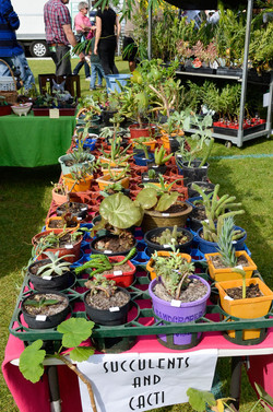 BSFFD-Cacti-Stall2