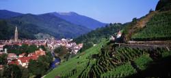 Alsace_Vignoble_-_Thann_©_ZVARDON