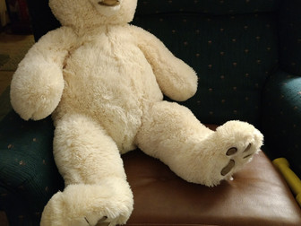 New Bear!