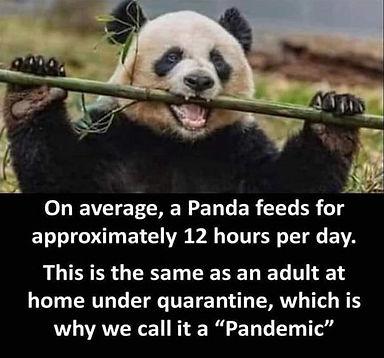 when-youre-a-panda.jpg